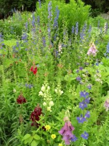 Flowers in the garden at George Washington's home, Mount Vernon. June 2015