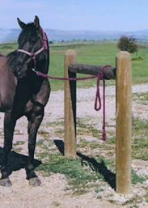 livestock_hitching_post